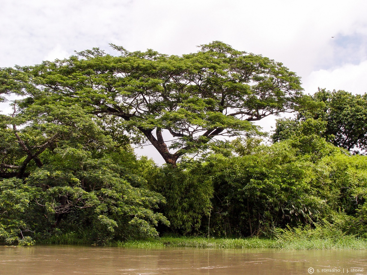 Tempisque River, Palo Verde National Park