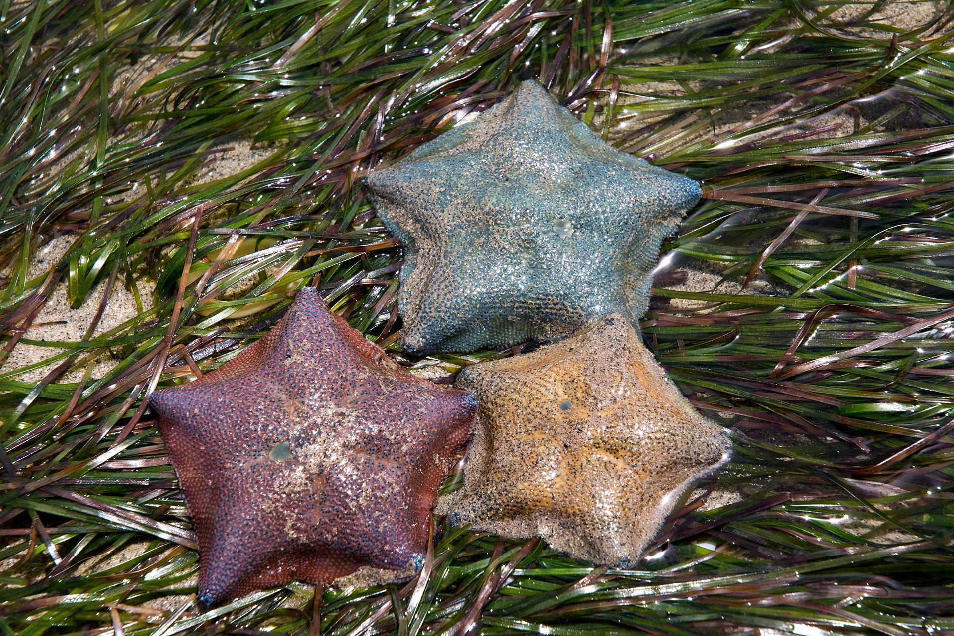 Cushion stars