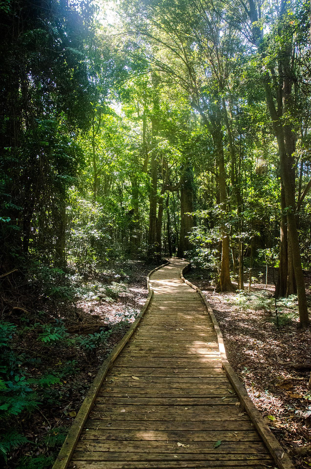 Wingham Brush Nature Reserve