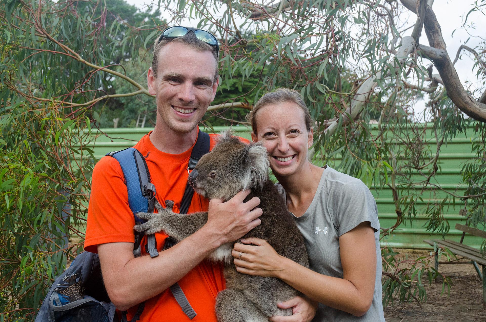 Lou the koala