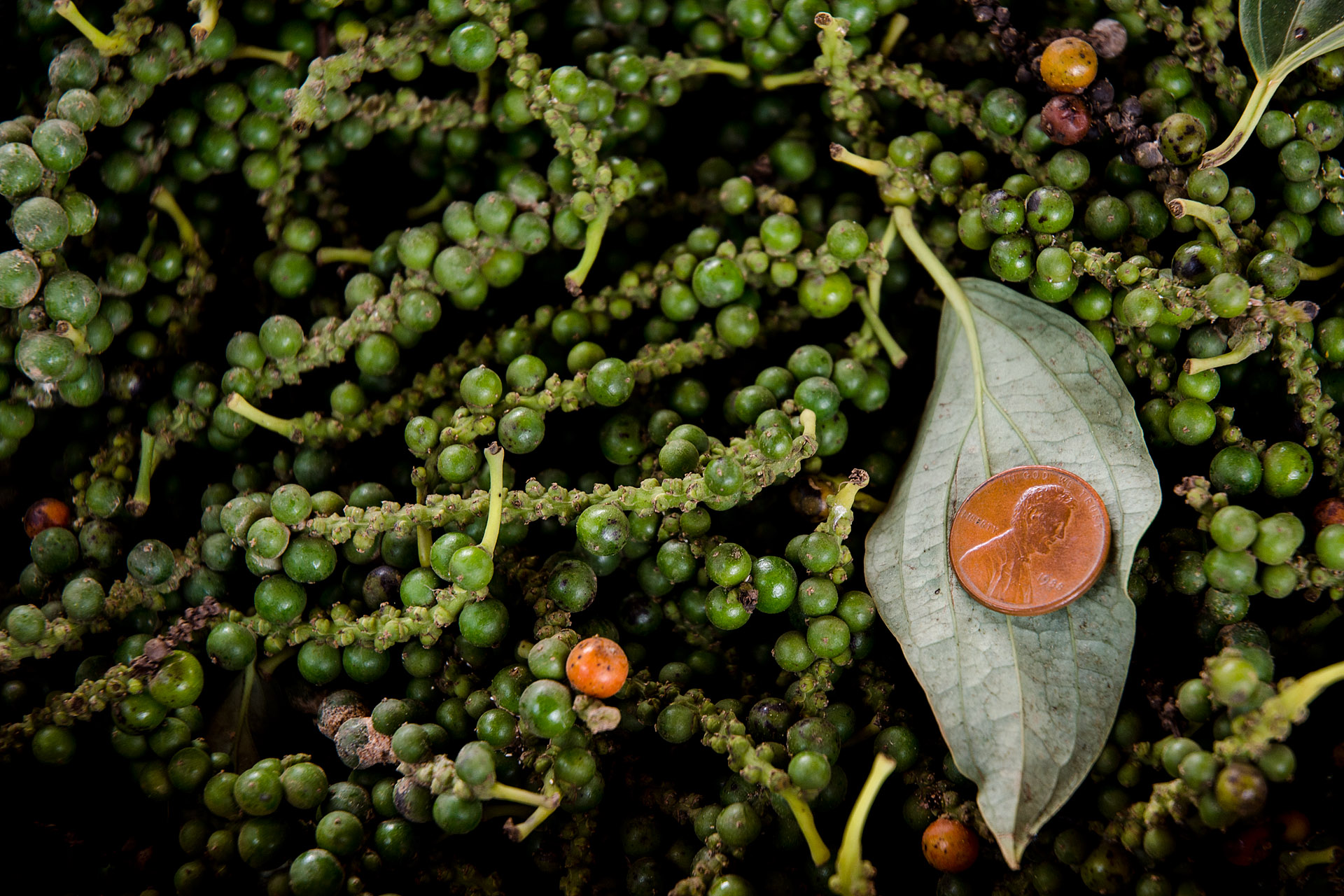 Kampot pepper