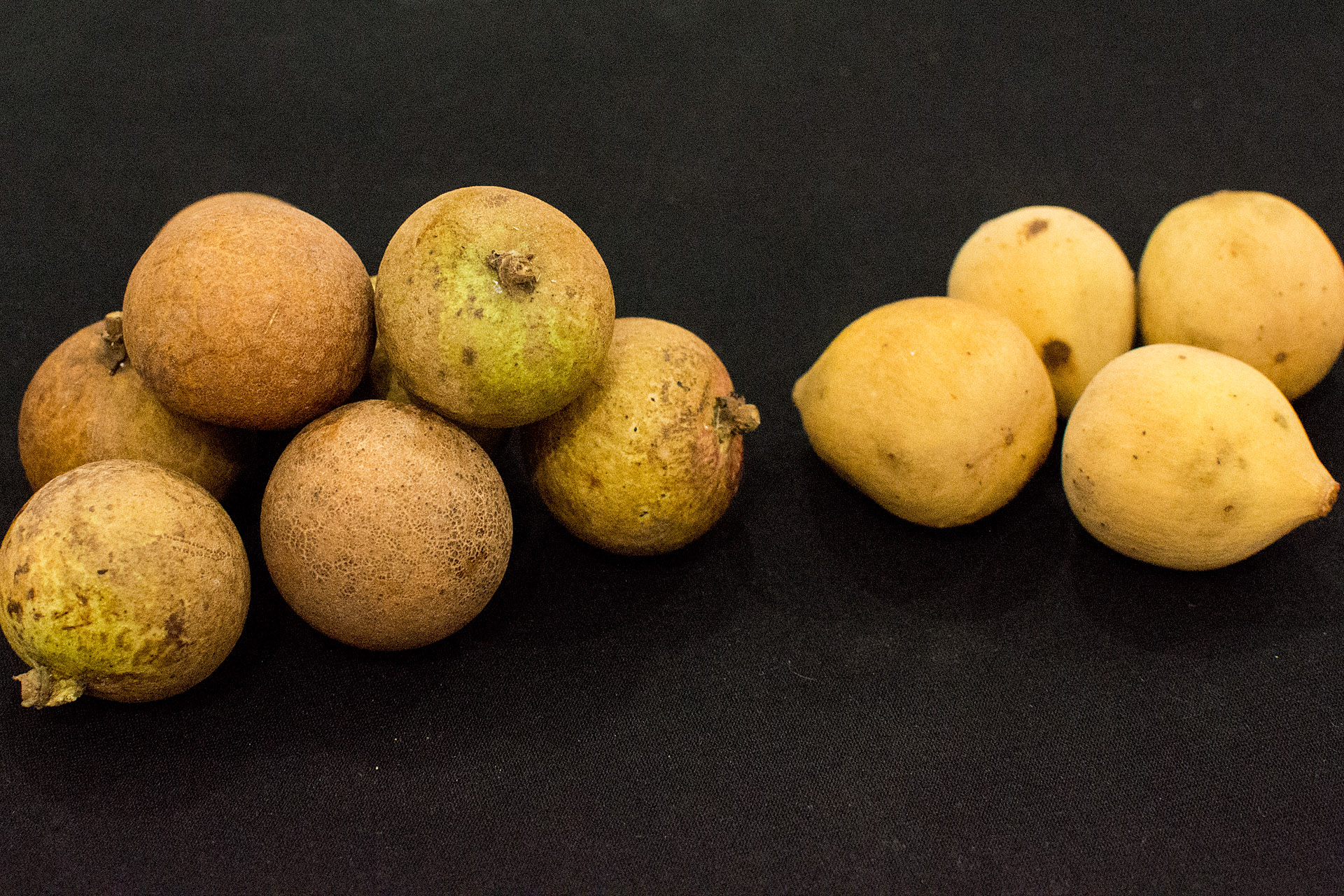 Longan & langsat fruit