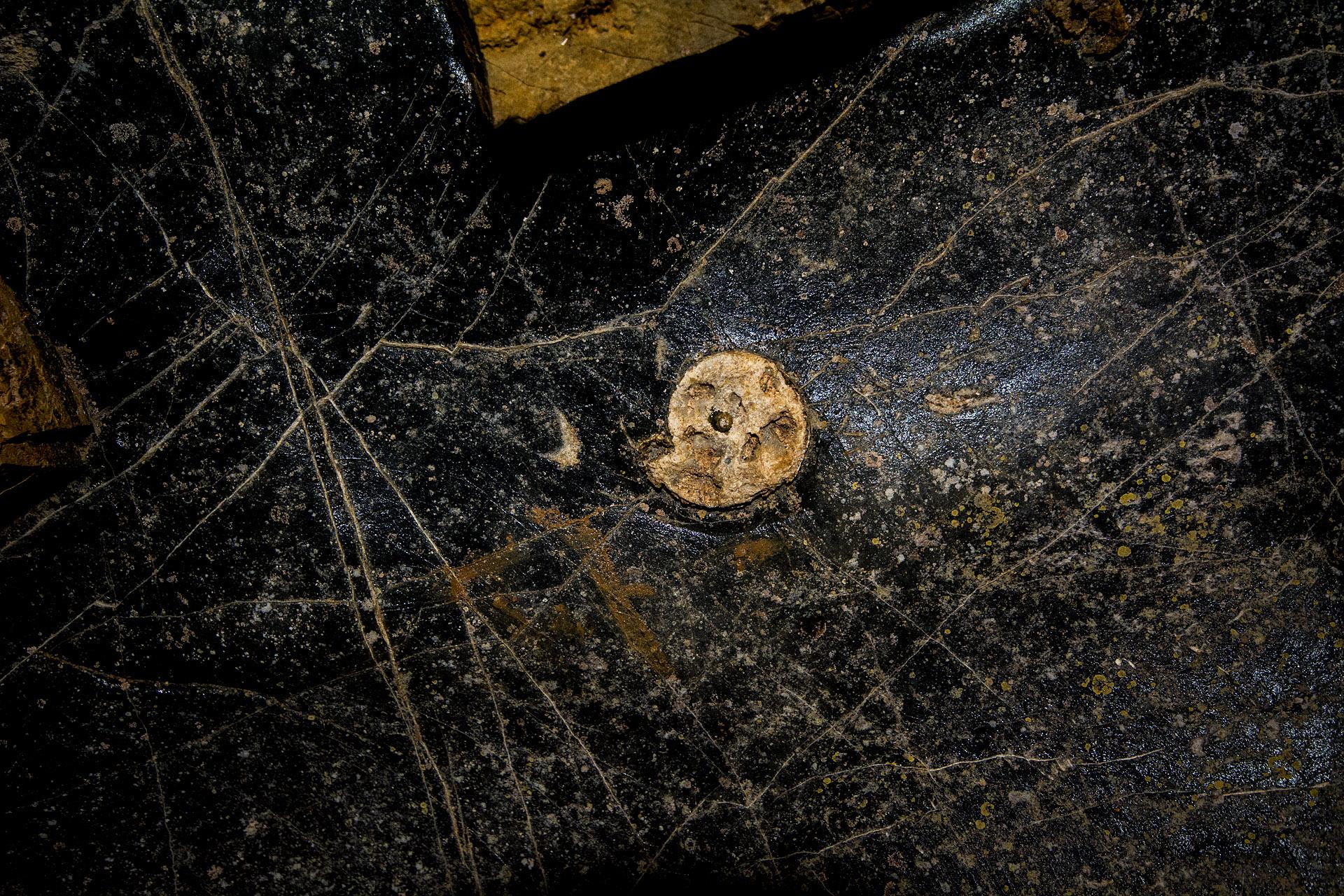 Fossil (mollusk)