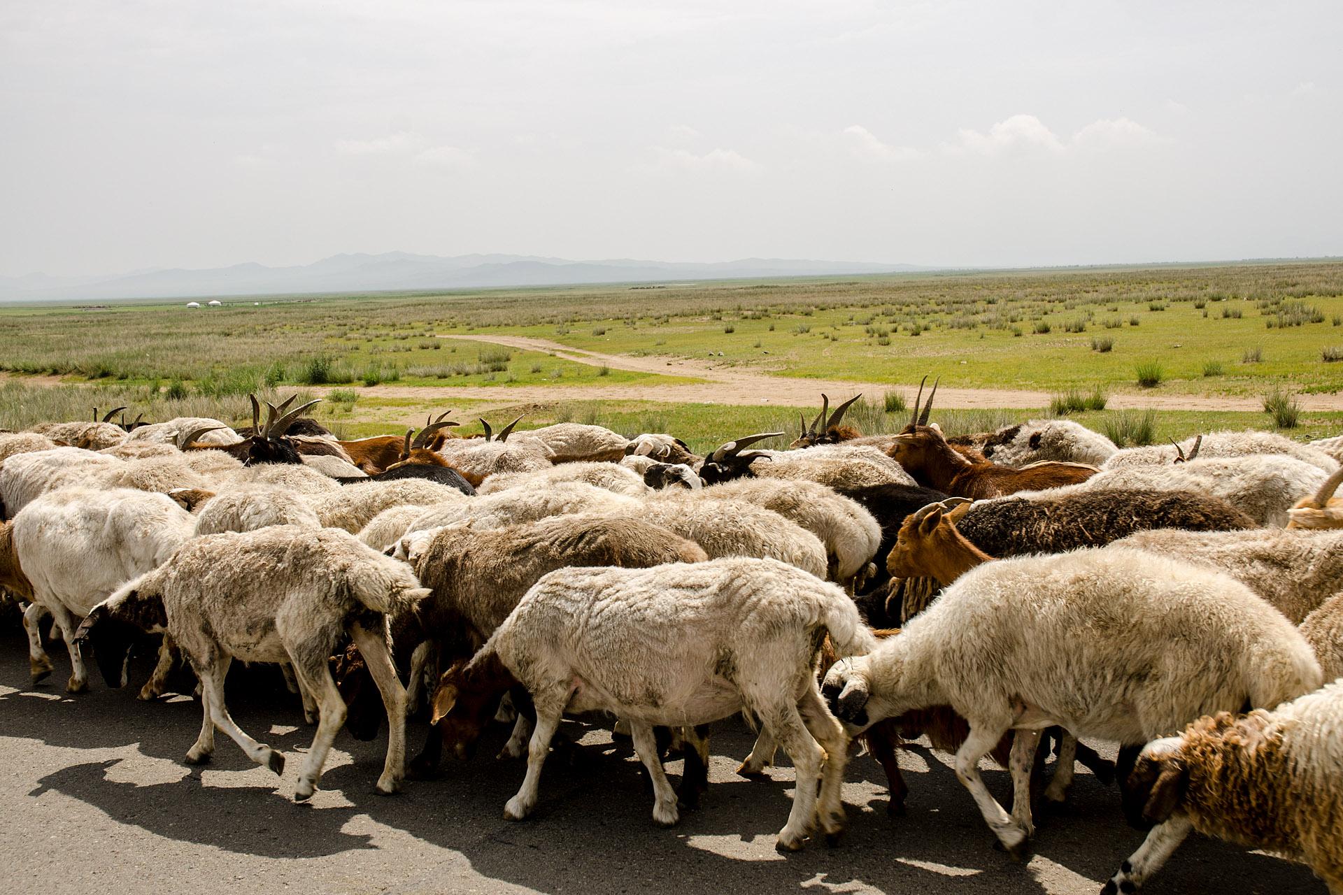 Mongolian traffic jam