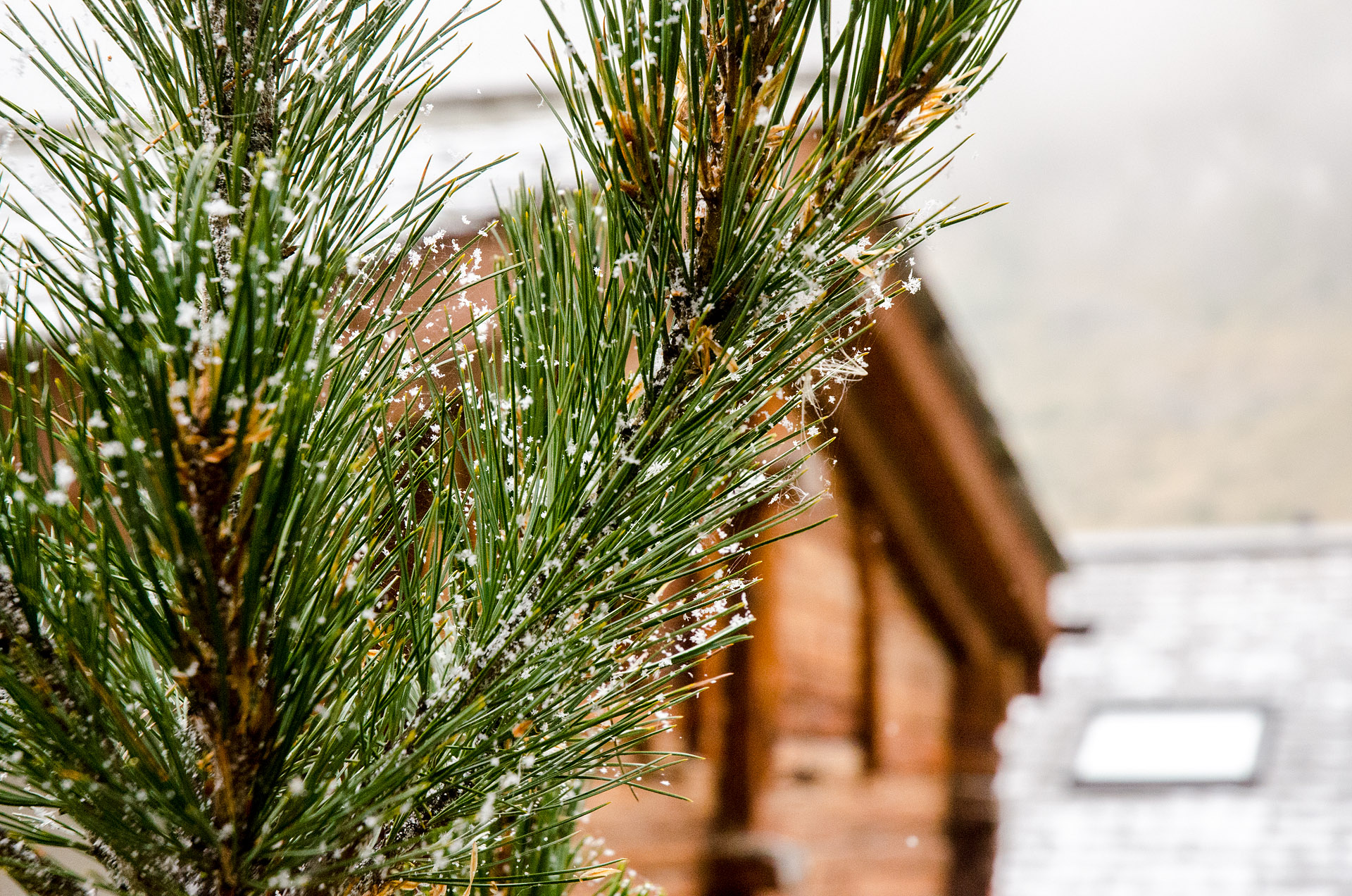 (Post-snow dance) snow in Zermatt