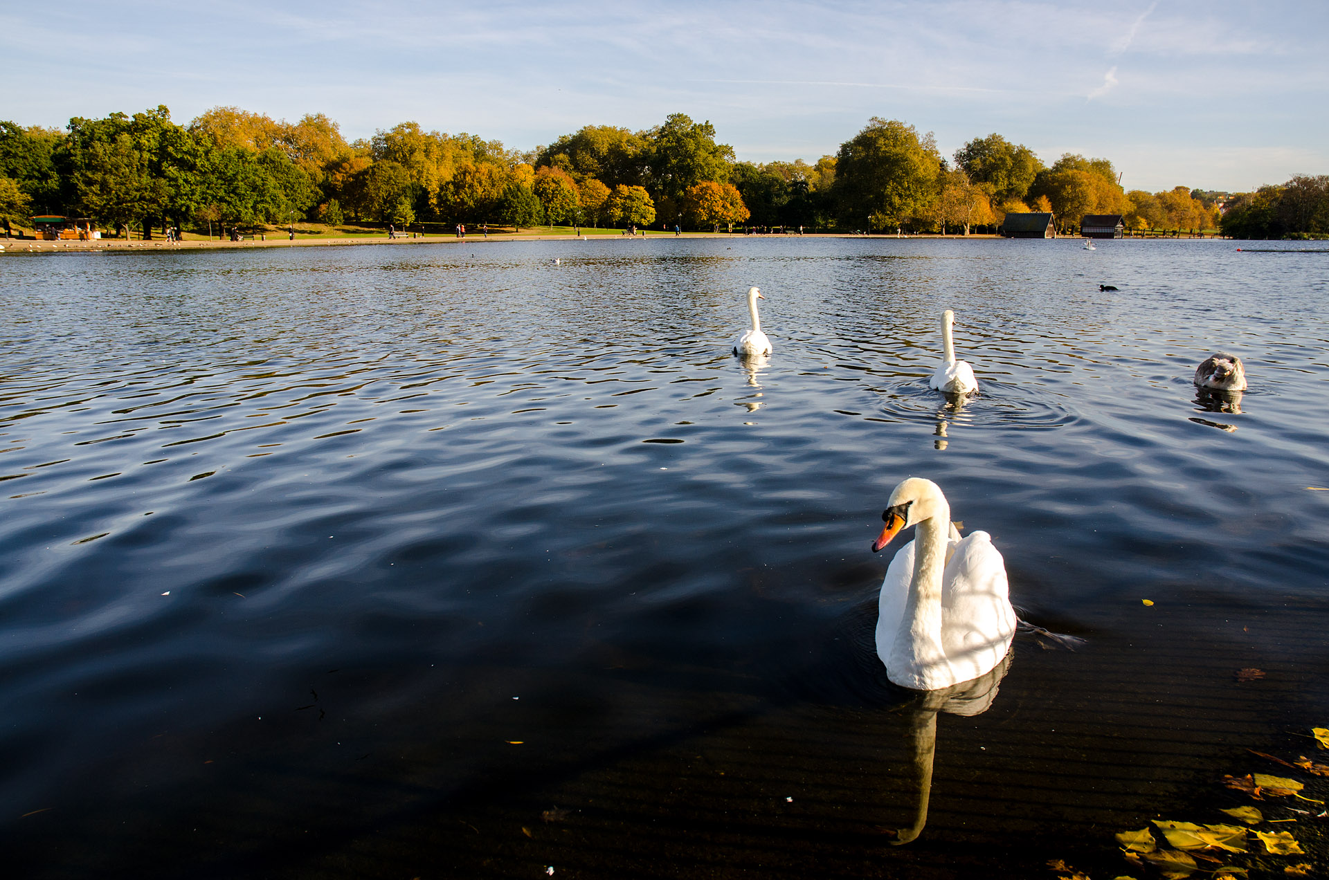 Hyde Park (The Serpentine)