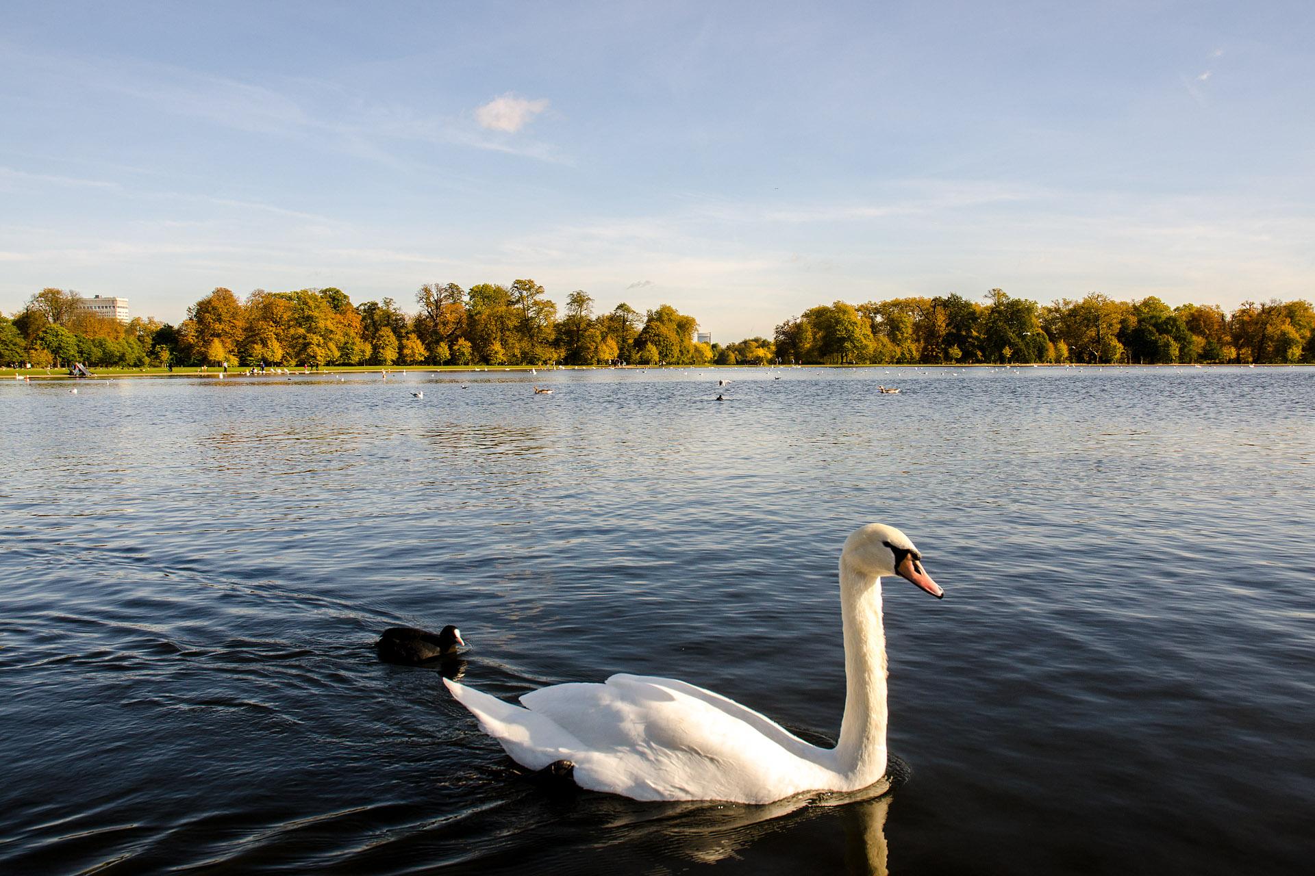 Round Pond (Kensington Gardens)