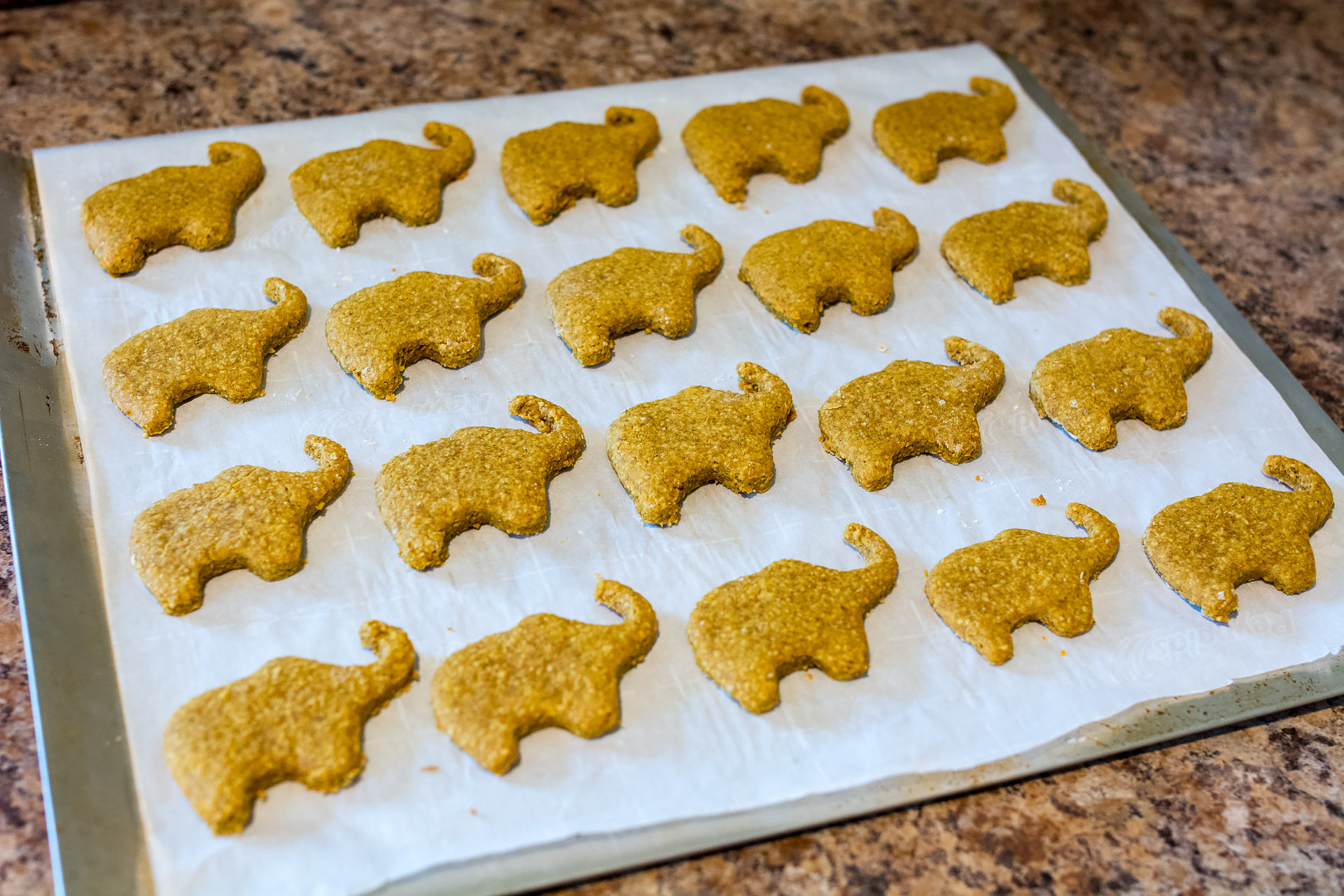 Homemade elephant-shaped doggy treats