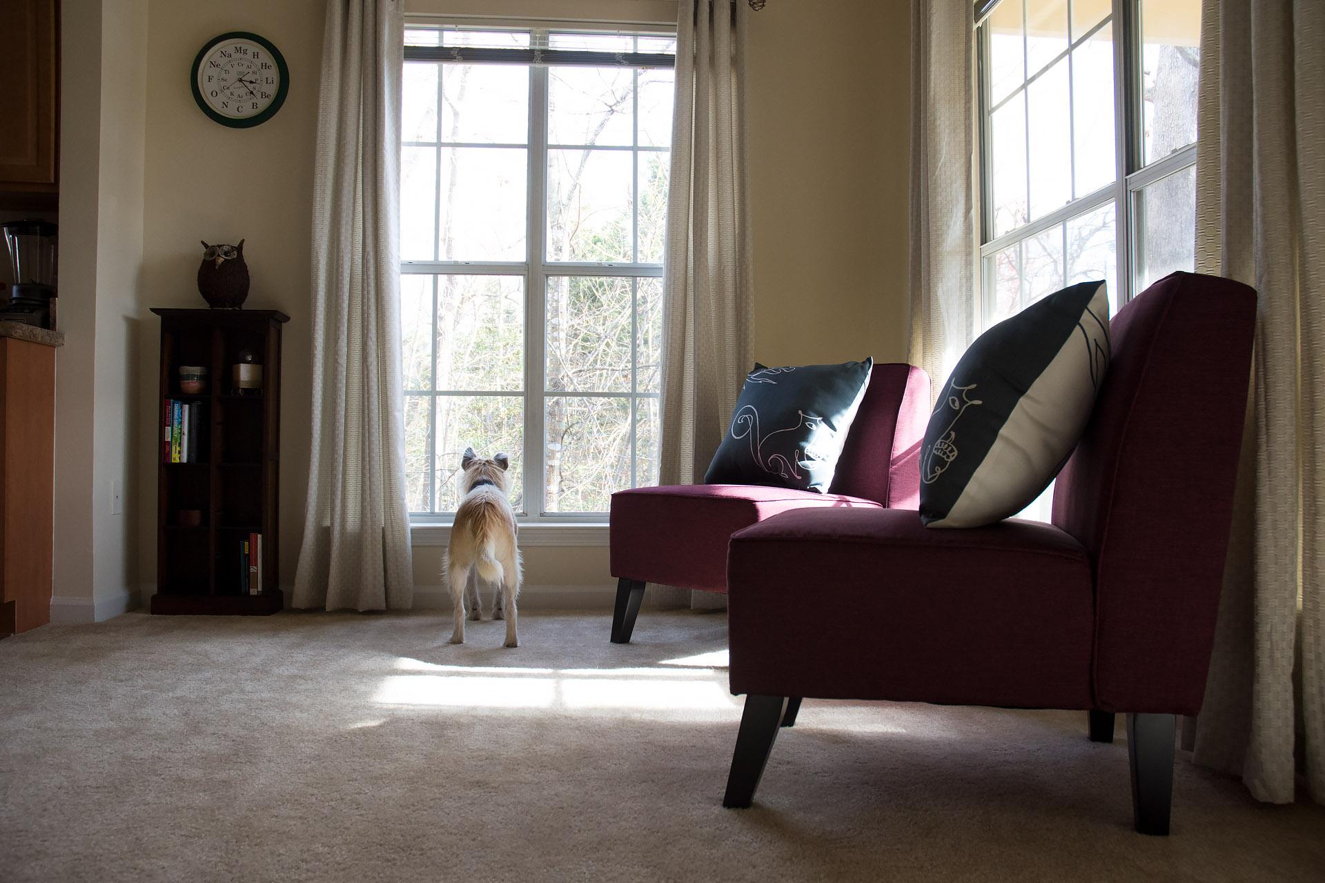 Sanchez' room & 'squirrel-viewing' window