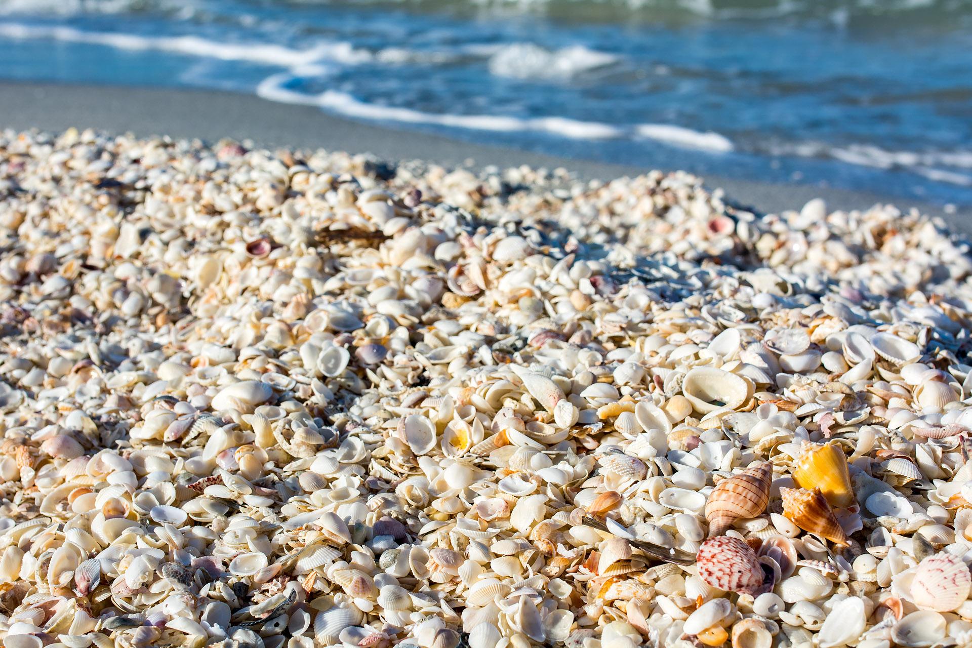 Shells at Blind Pass