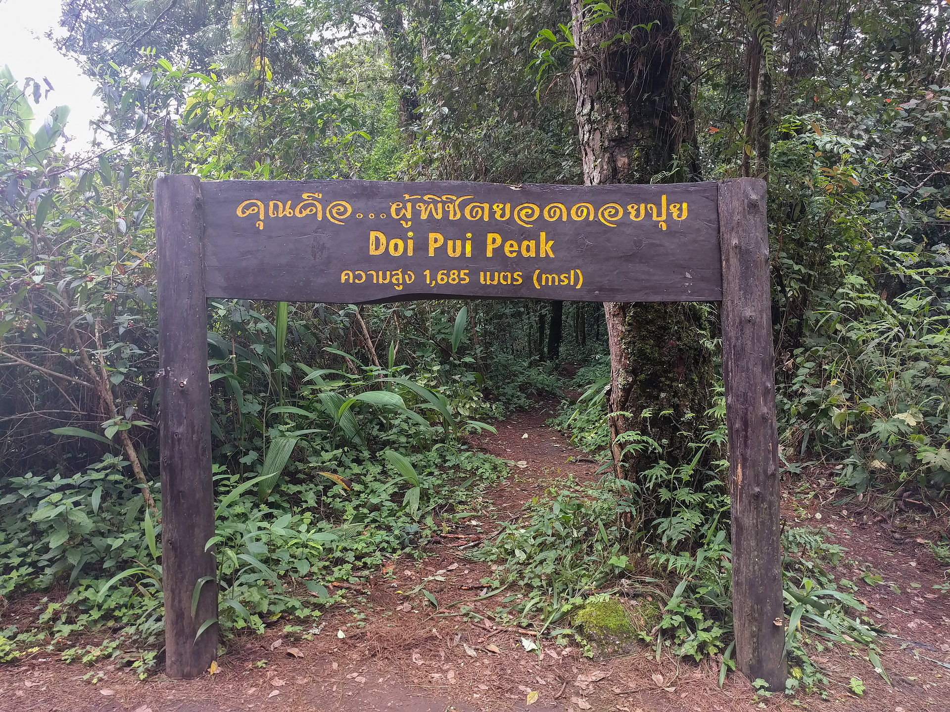 Doi Pui summit
