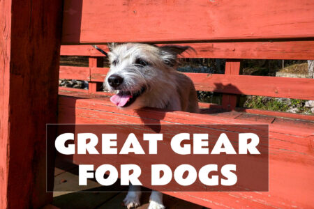 Great Gear for Dogs