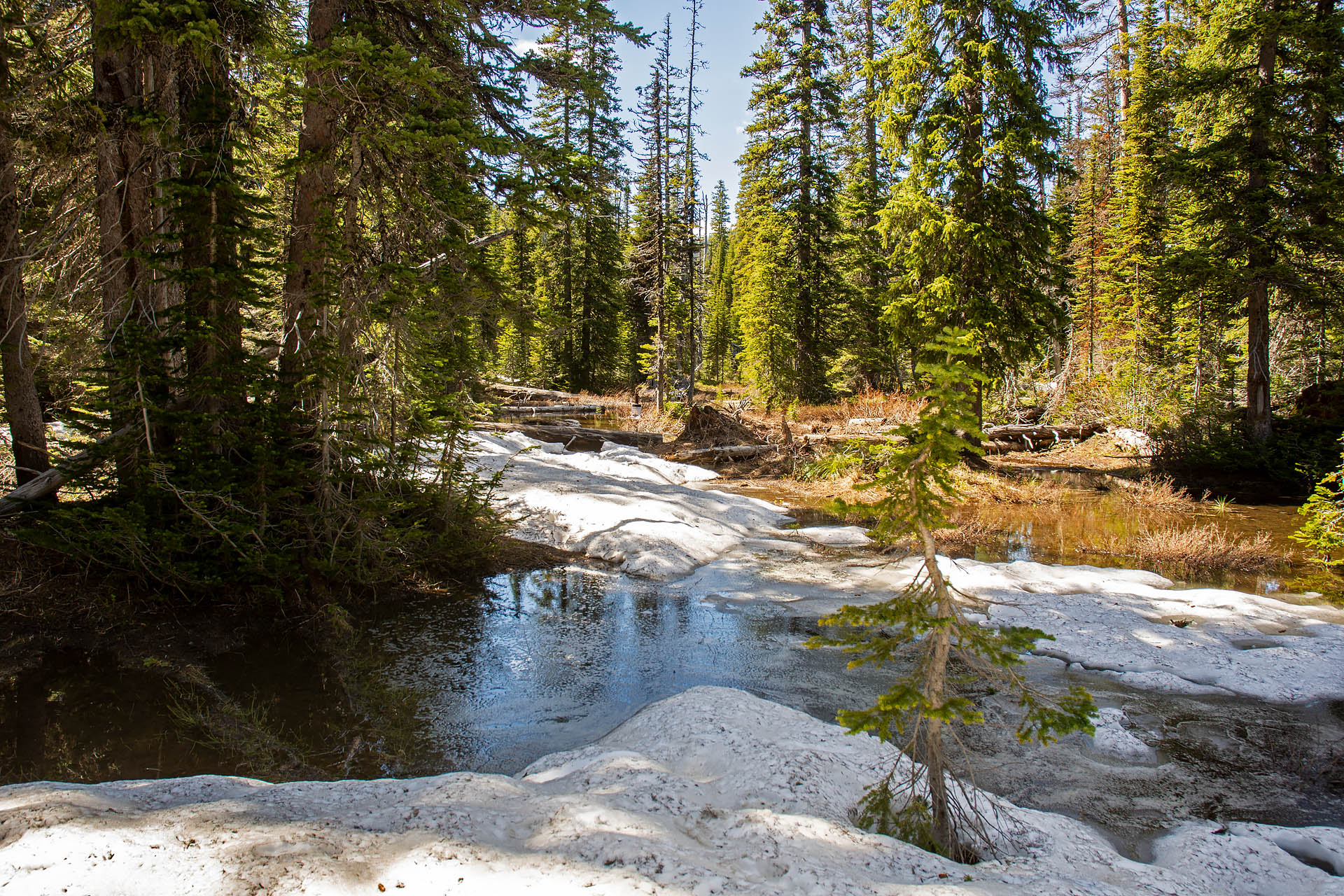 Doris Ridge Trail