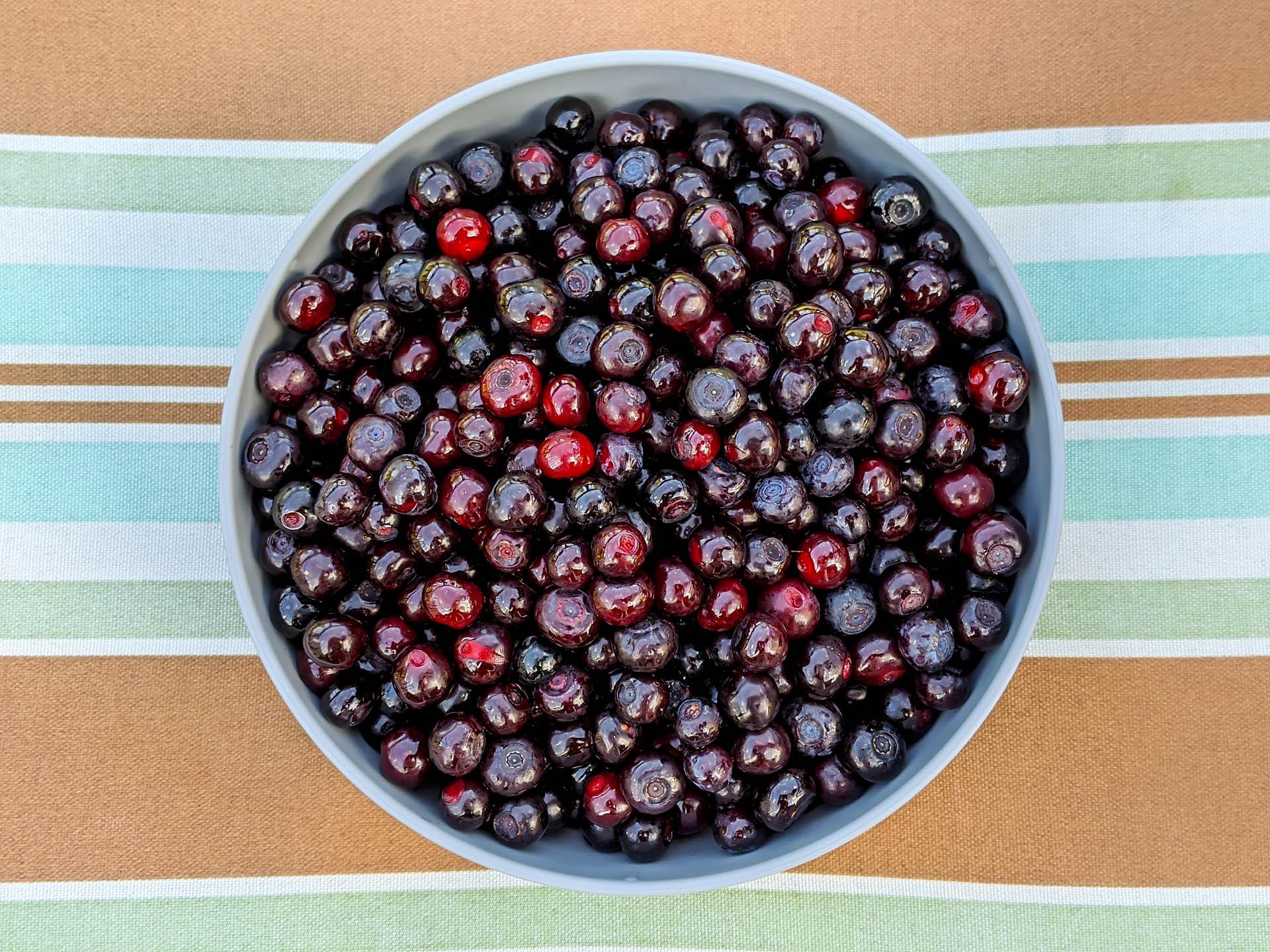 Huckleberry hoard