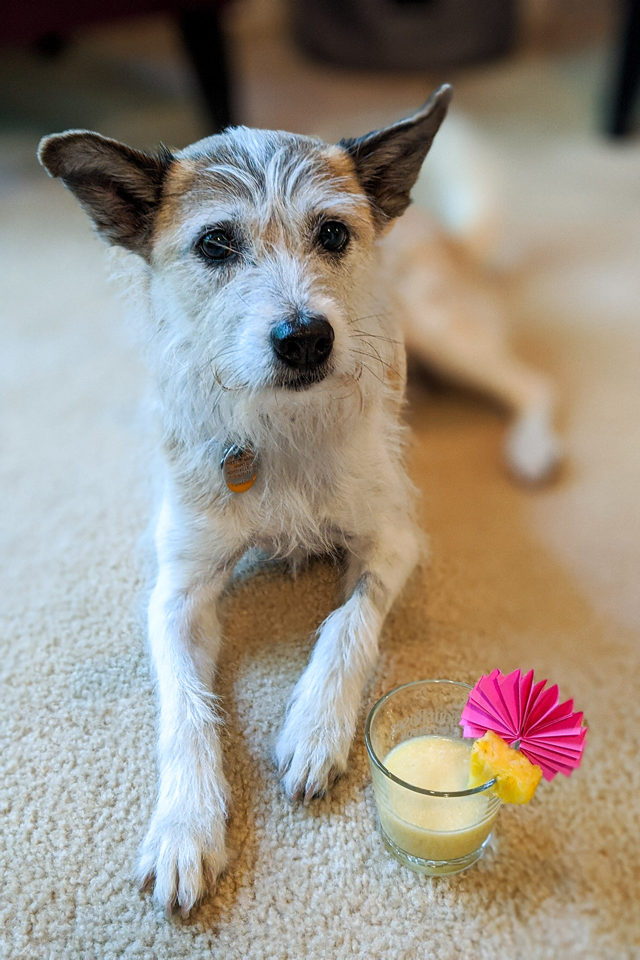 "Doggy safe coladas for our ""beach"" day"