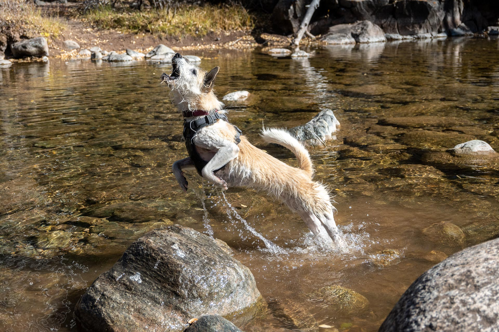 Chasing rocks in Cascade Creek