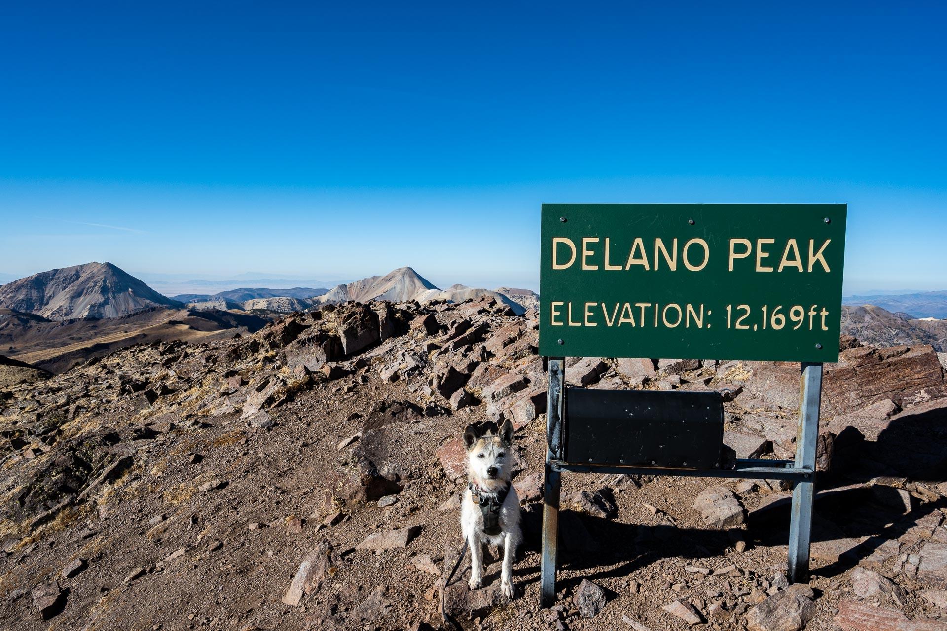 Summit pup